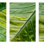 """sail triptych one"" by NOTOFOTOARTWORKS"