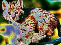 Baby Bobcat Wild Animal Art