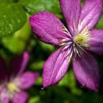 """Purple focus"" by allandavisjr"