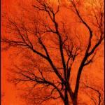 """Autumn Rising..."" by argosphotos"