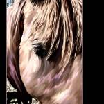 """""""Horse Head Shot"""" by PhotographicsUnlimited"""