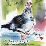 """George Beloved San Antonio Duck"" by GinetteCallaway"