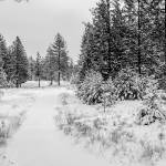 """Beautiful winter panorama with snow covered trees"" by digidreamgrafix"