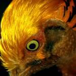 """""""Birds Eye"""" by dawnanderson"""
