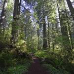 """Damnation Creek Trail"" by JohnChaoPhoto"