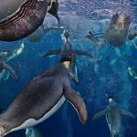 """Emperor Penguins Under Water"" by netbrands"