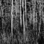 """woods alive 2 b/w"" by NOTOFOTOARTWORKS"