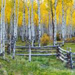 """Aspen Fall Panorama"" by Santomarco"