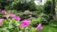 Petunias and Pond
