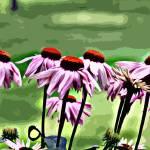 """Echinecea Delights"" by ArtbyMaryJaneGM"
