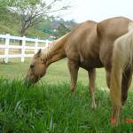 """""""Grazing horse"""" by tushaani"""