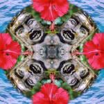"""""""Bali mandala - hibiscus"""" by belinda"""