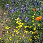 """Seattle Wildflowers - 1"" by patriciaschnepf"