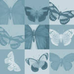 """Blue Butterflies"" by jow"