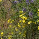"""Seattle Wildflowers-3"" by patriciaschnepf"
