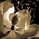 """""""Magnolia 3"""" by kellyfla2003"""