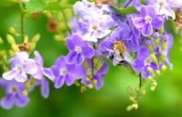 Purple Flowers with Bee