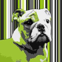 English Bulldog Puppy Abstract