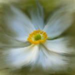 """Flower Study in Oil"" by AnneVis"