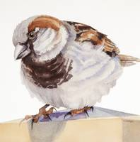 Inquisitive Sparrow