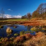 """Rocher Bog"" by roger"
