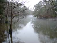 foggy chipola 001