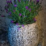 """Lavender Vase"" by Inge-Johnsson"