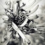 """""""Dancing flower bw"""" by HappyStreetPhotoArt"""