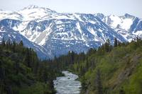 View of Canadian Rockies from Yukon Suspension Bri