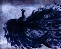 BLACK PEACOCK in BLUE