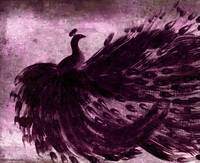 BLACK PEACOCK in VINTAGE PURPLE