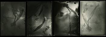 4 photographs from 4 silver gelatin ambrotypes