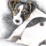 """""""Jack Russell Welpe"""" by ArtsandDogs"""