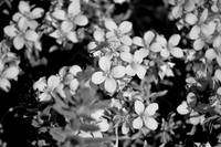 Desert Flowers in B&W