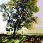 """Oak Tree In Later Summer Landscape"" by GinetteCallaway"