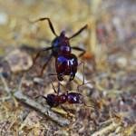 """Big Ant Little Ant"" by ben-eisenberg"