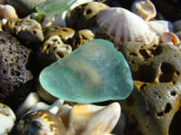 Blue Seaglass art prints Coastal Beach Fossils