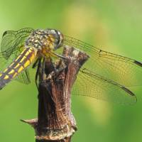 Dragonfly Art Prints & Posters by Michelle Teeter