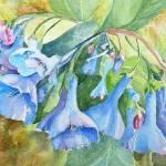 """Bluebells"" by lindahaile"