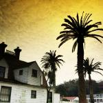 """Presidio Palm"" by Katchlight"