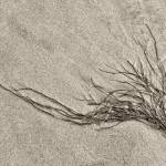 """Seaweed"" by CoraNiele"