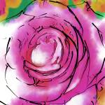 """""""Purple Rose Bloom"""" by Kirtdtisdale"""