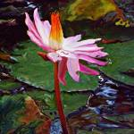 """""""Fire in the Pond"""" by ChrisCrowley"""