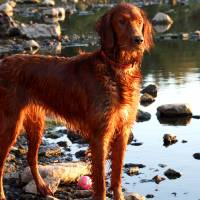 dog river Art Prints & Posters by Mary McBrearty