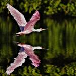 """Pink Flight"" by JMasonPhotography"