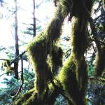 """Moss"" by DianeRoher"