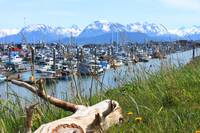 The Homer Harbor