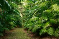 Subtropical vegetation