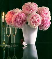 Peony and champagne