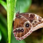 """Butterfly"" by JZP"